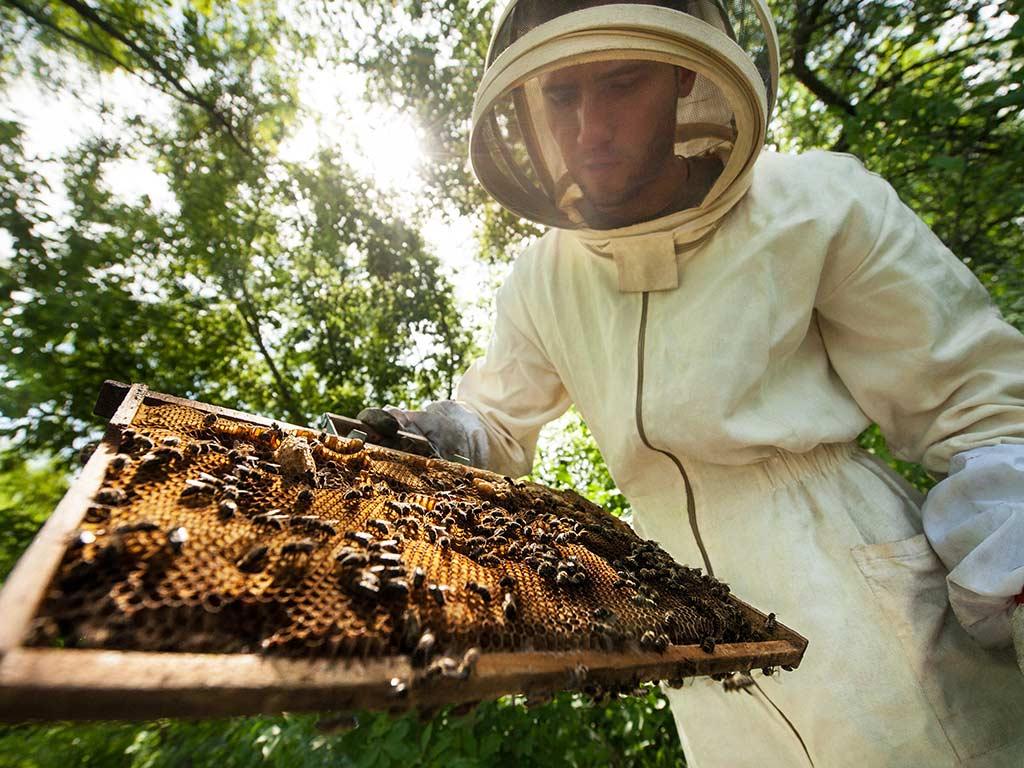 Bee Farm Manuel Antonio Tours