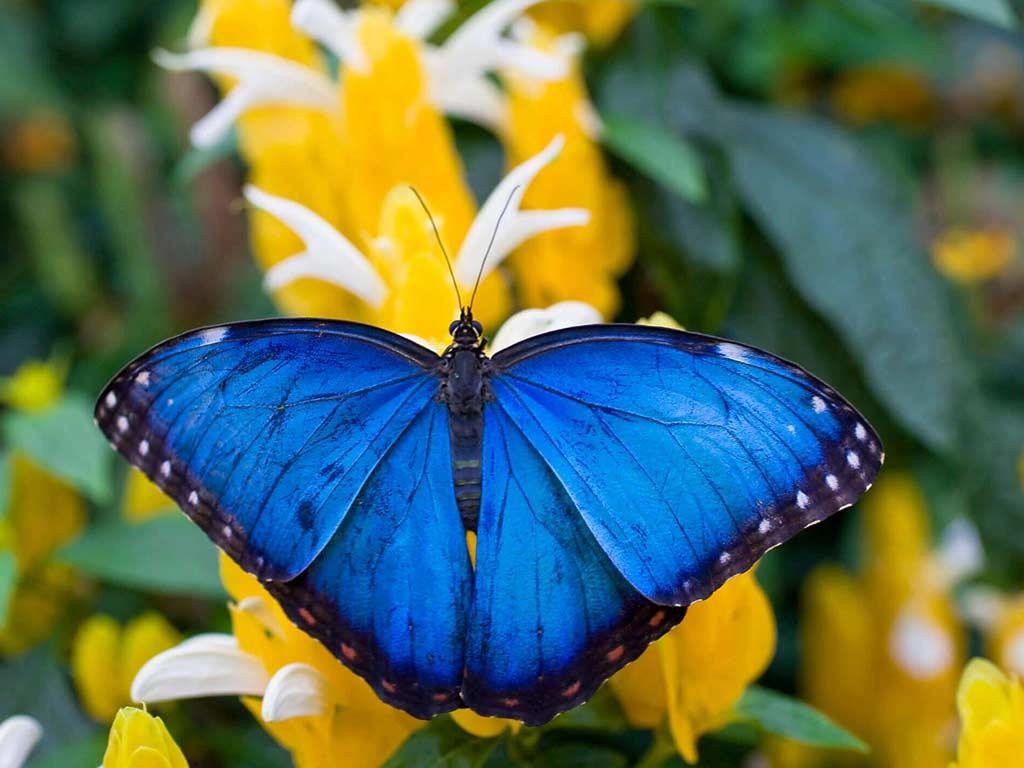Butterfly and Reptile Garden Manuel Antonio