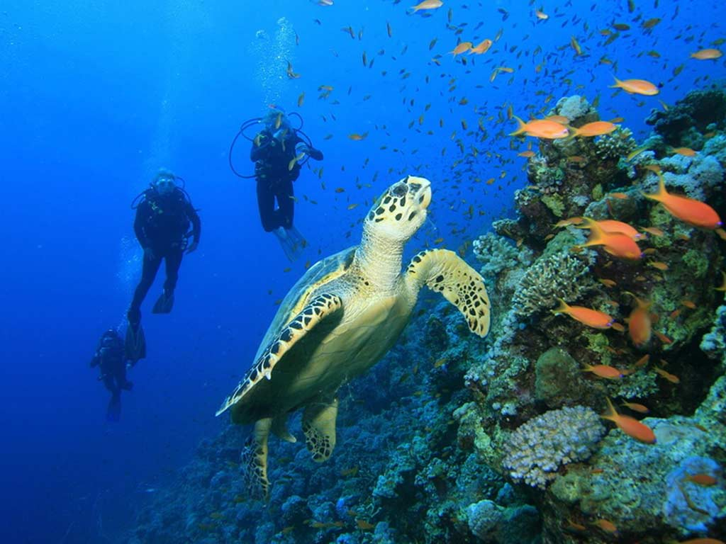 Manuel Antonio Scuba Diving Tours
