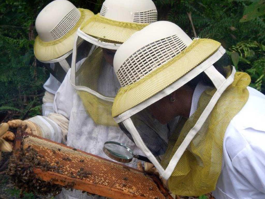 volunteer bee conservation